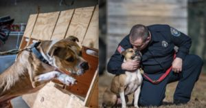 Rescue Becomes First Arson K9 Detection Pit Bull