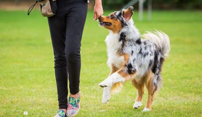 3 Dog Aggression Tips To Make Your Dog TRULY A Good Boy