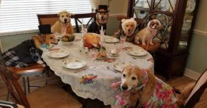 Therapy Dogs All Dressed Up For Thanksgiving Will Tide You Over Til Christmas