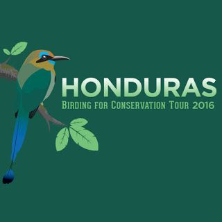 Honduras Birding for Conservation Tour