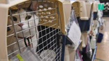 Shelter Pets Get Lifted Out of Florida