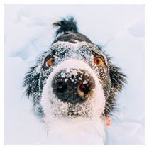 Pet Travel: Why Temperatures Matter