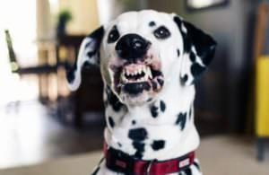 """Woman Finally Trains Her Dog To Smile & The Result Is """"Adorifying"""""""