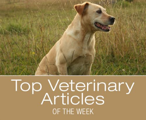 Top Veterinary Articles of the Week: Foxtail Injuries, Sunscreen after Surgery, and more