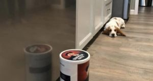 Puppy Has Ongoing Dispute With The Quaker Oats Man