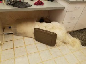 Dog Indulges Himself After Sneaking Into Food Container