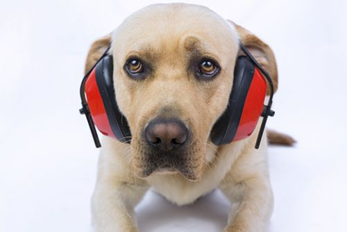 Top Veterinary Articles of the Week: New Year's Eve Safety for Your Pet