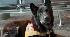 Video: Retired Service Dog and His Marine Handler Reunite After Three Years Apart