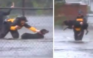 Reporter Interrupts Live Newscast To Help Rescue Dog From Hurricane Flood Waters
