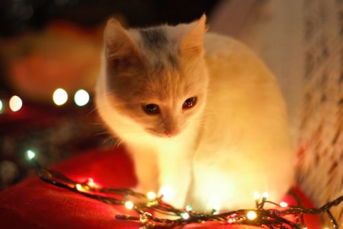 Keeping Your Pets Safe at Christmas