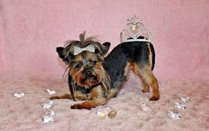 The Top 5 Richest Dogs Of The 21st Century