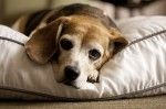 15 Best Rated Pet Beds for Dogs & Cats