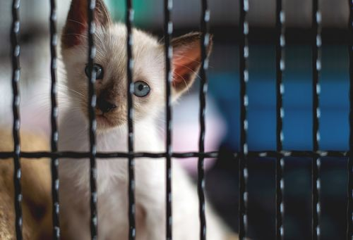 Animal Legal Defense Fund Sues SUNY College of Optometry over Invasive Experiments on Kittens and Young Cats