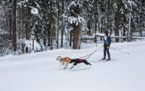 Skijoring With Your Dog Is The Winter Sport You Never Knew You Loved
