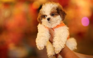 5 Common Mistakes New Puppy Owners Make