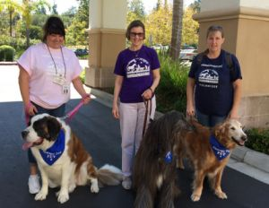 What is it like to volunteer with a Therapy Dog?