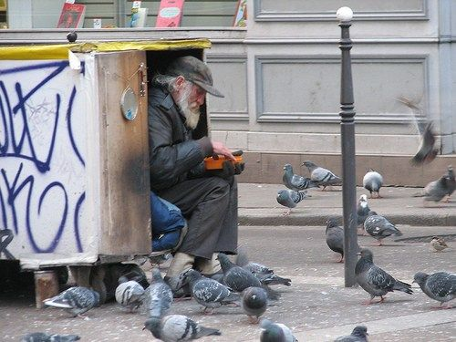 Birds and the Homeless Problem