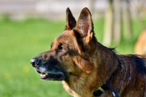 7 Things You Didn't Know About Your Dog's Ears