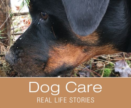 Dog Care, Trust and Cooperation - How Do I Know When There Is Something Wrong with Cookie's Foot?