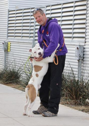10 Safety Tips for Exercising with Your Dog