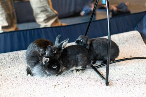 "Seattle City Hall becomes ""Kitty Hall"". and ""Bunny Hall"" for the day"