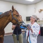 10 Facts About Recurrent Airway Obstruction in Horses