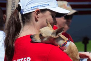 Cross-Country Flight Gives 160 High-Risk Dogs New Hope For The Future