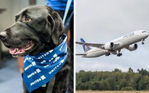 United Airlines Bans 25 Dog & Cat Breeds