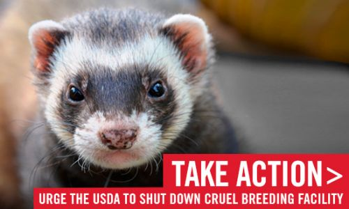 Urge the USDA to Shut Down Cruel Breeding Facility
