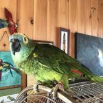 Feral Arts! A Parrot Sanctuary Mixing the Arts and Animal Welfare