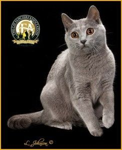 Meet the Chartreux