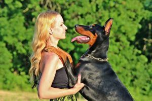 How To Teach Your Doberman To Stop Jumping On People