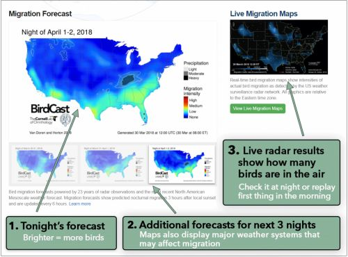 Here's How to Use the New Migration Forecast Tools from BirdCast