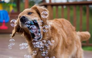 10 Clever Canine Enrichment Ideas You Can Easily Do At Home