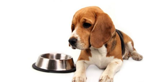 Dog Longevity Survey: How Important Is Diet for Longevity?