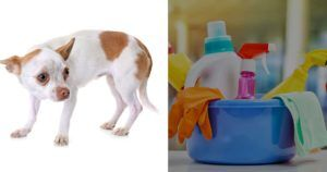 5 Ingredients That Are Toxic to Dogs in Household Cleaners