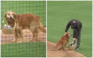 """Minor League Baseball's Diamond Dog Is The Cutest """"Water Boy"""" There Is"""