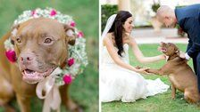 32 Times Dogs Dutifully Helped Their Owners Tie The Knot