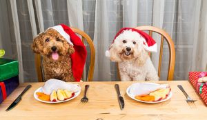 Why You Should Plan A Healthy Diet Plan For Your Dog