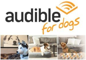 IHeartDogs Partners With Audible To Help Feed Hungry Shelter Dogs