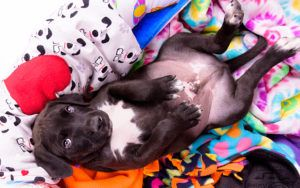 Wrapped In Love - Group Of Crafters Change The Lives Of Rescue Pets Through Love And Kindness
