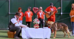 Update: Nearly 500,000 Dogs Fed With Our Miracle Of Love Campaign