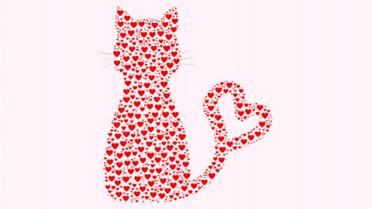 4 Quick Facts About Heart Disease in Cats