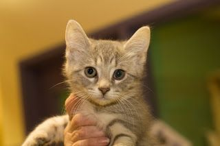 What is the best age to spay or neuter my pet?