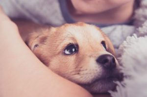 New Research Shows That Petting Dogs Is Like A Drug For Our Brains