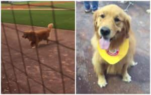 "Minor League Team's ""Bat Dog"" Decides To Go For The Ball, Instead"