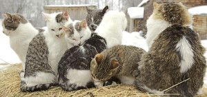 The Benefits of Spaying or Neutering Your Cat