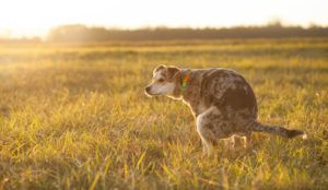 10 Ways A Probiotic Can Help Your Dog