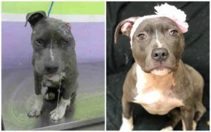 Former Bait Dog Gets New Lease On Life Thanks To Your Help!