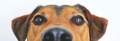 What's that Gunk in My Pet's Eyes?